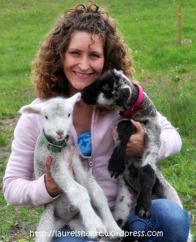 Laurels lambs